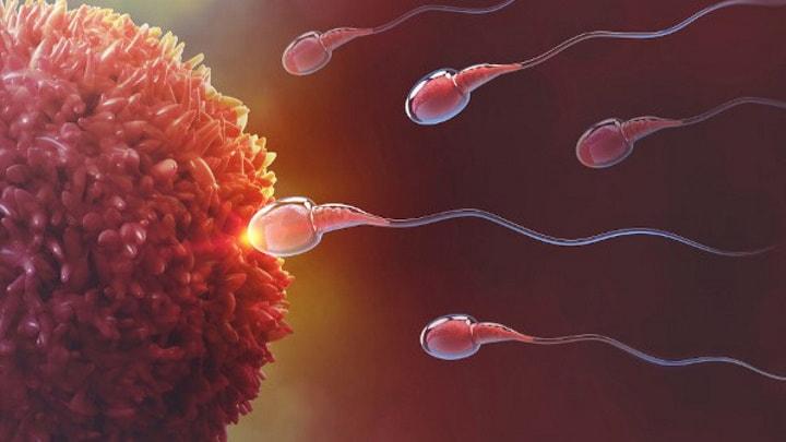 Espermatozoides
