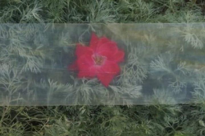 Madeira transparente mais eficiente e resistente que vidro