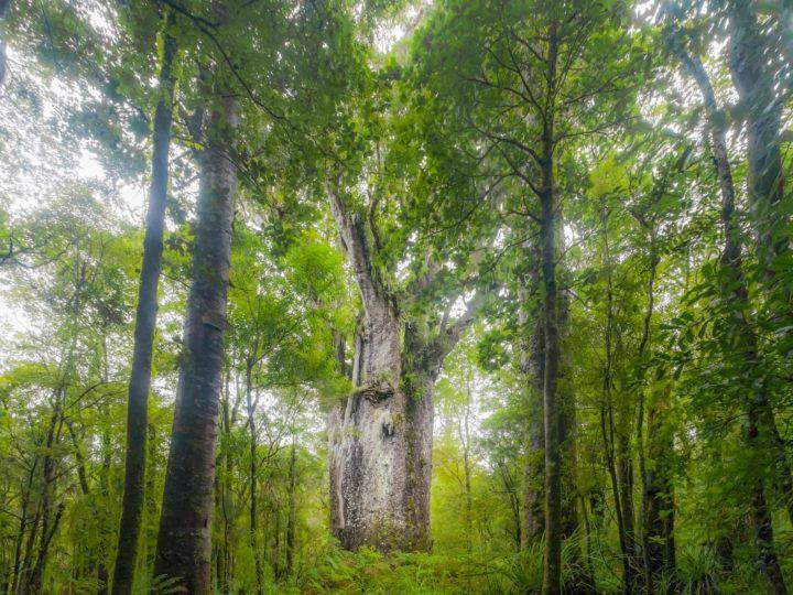 Imagem de árvore que poderá ser a testemunha de uma época difícil para a humanidade