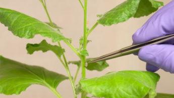 Elétrodos maleáveis para comunicar com as plantas