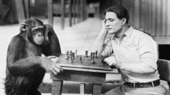 Macaco e humano a jogar xadrez