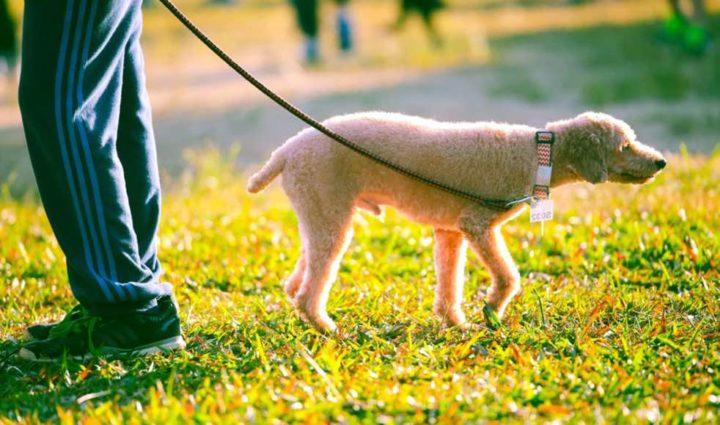Cientistas descobrem novo tipo de coronavírus em cães