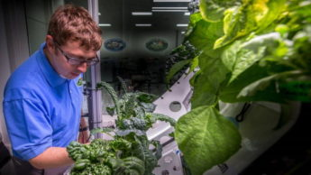 Vegetais no espaço
